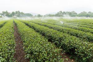 Traditionele Horizontale Landbouw