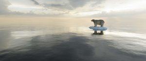 ijsbeer op ijsschot