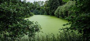 Algen in water
