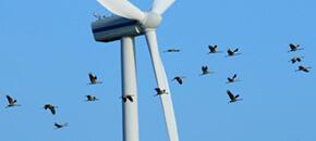 Vogels bij windturbine