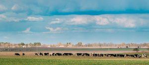 houden van vee allesbehalve milieuvriendelijk